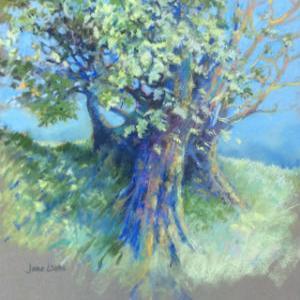 Old Oak by Jane Wells